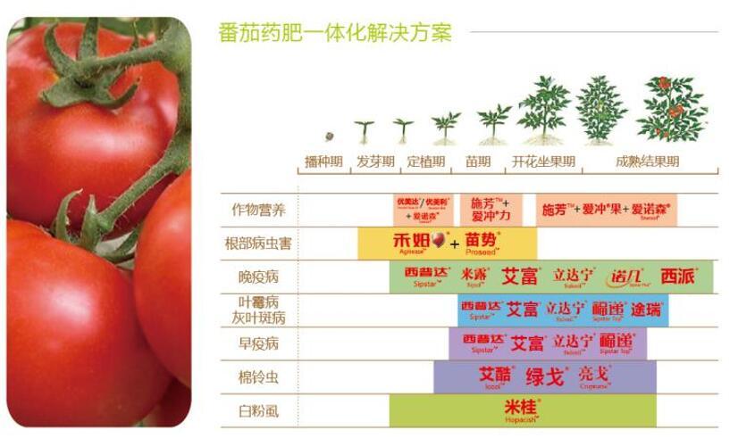 番茄药肥一体化解决方案