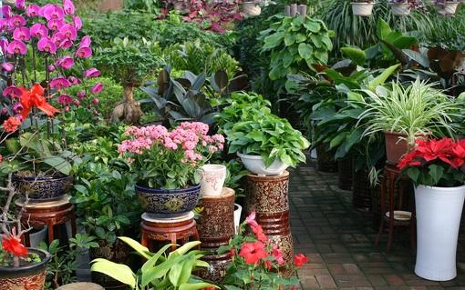 盆景植物的有机肥施肥管理