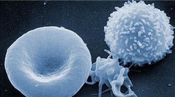 CRP和白细胞的联合检测文献