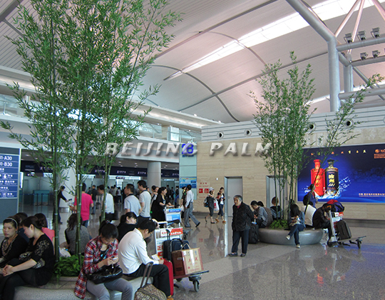 Plant decoration project in Chongqing Jiangbei Airport