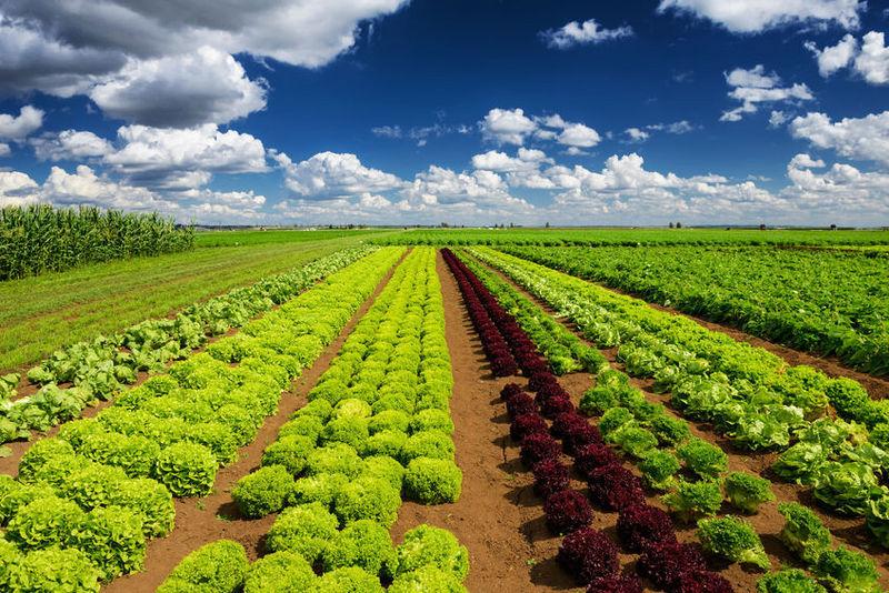农业大数据怎么玩?珈和科技用卫星遥感和深度学习服务农情信息