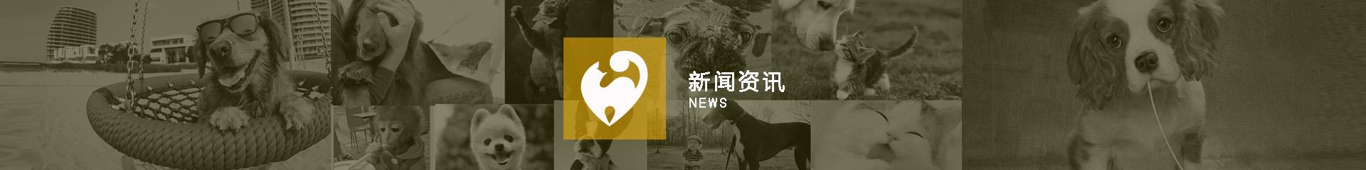 深圳宠物空运