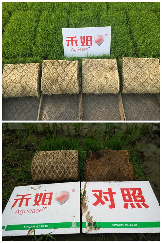 世科姆种衣剂节本增效之水稻篇 —水稻拌种,今年流行禾姆®