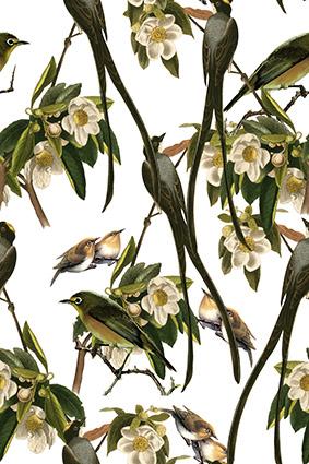 装饰小鸟燕雀植物树叶