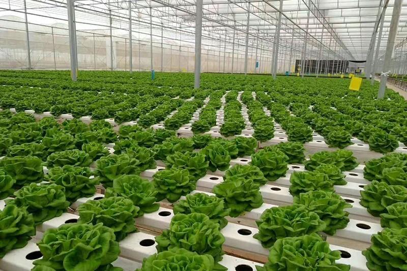 原生态农业蔬菜基地