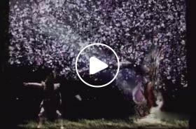 魔术互动视频