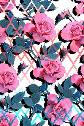 棱角铁栏植物花