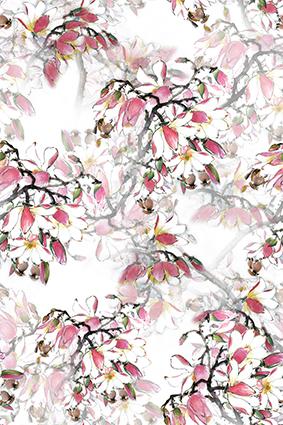 透视盛开树枝花叶