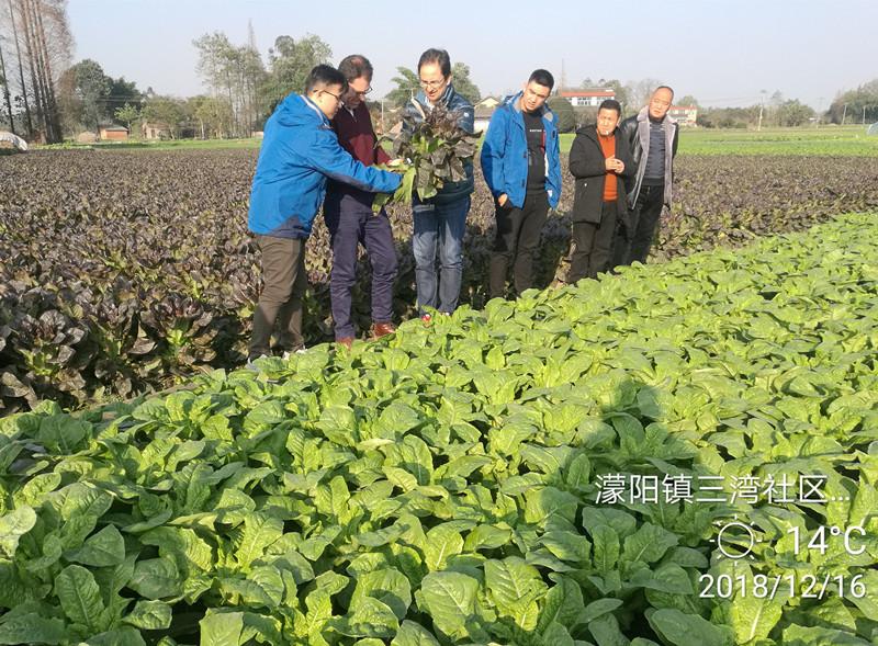 世科姆总部专家走访中国特肥市场