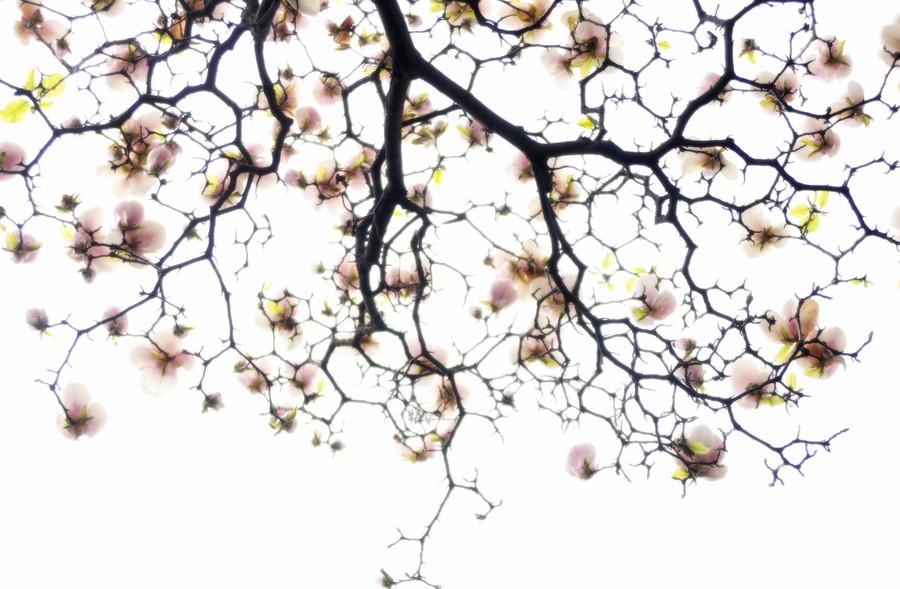 南京集思慧远客户发表--宝华玉兰的完整质体基因组及其与木兰科植物的遗传比较