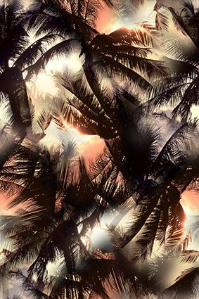 风景树梢阳光洒落