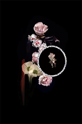 圆窗斑点植物花琼