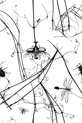 艺术昆虫素描图案