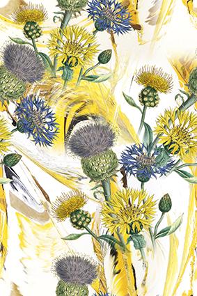 果实花苞黄色菊花