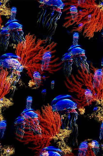 黑底珊瑚蓝色水母