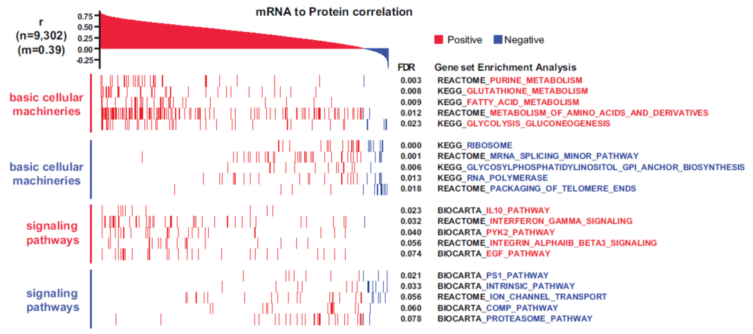 转录组和蛋白组联合分析