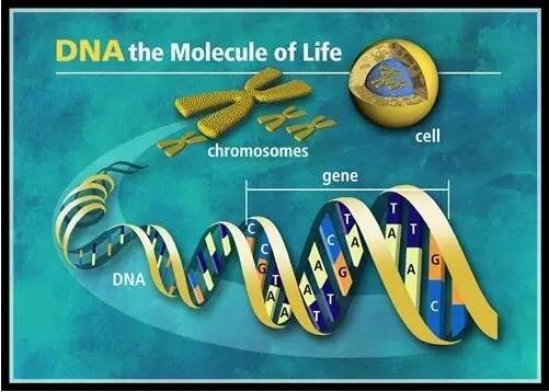 个体化治疗---基因检测使他们免于严重药物反应