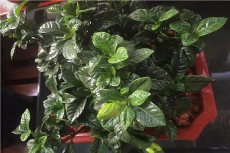 注意|植物缺氮的症狀,怎麽辦