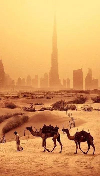 中东电商的沙漠之旅