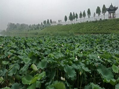 中牟国家农业公园