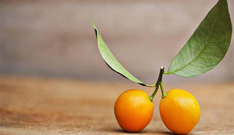 2018产季柑橘产销形势分析报告