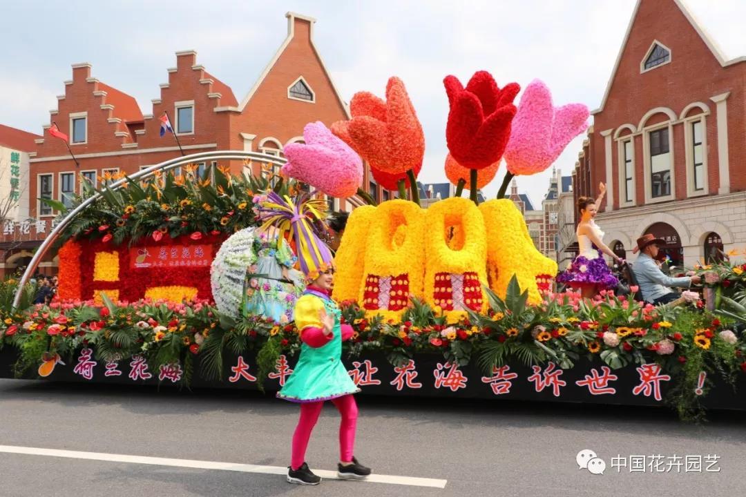 2019荷兰花海郁金香文化月活动启幕 | 动态