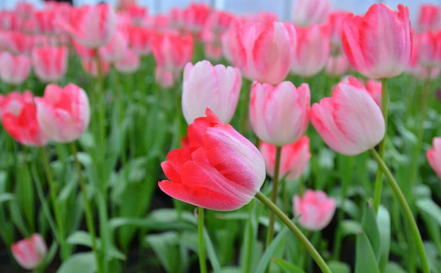 春游賞花去哪里?四川十大賞花圣地,美翻你的春天
