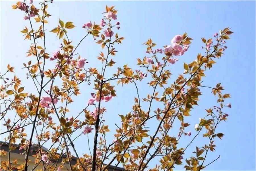春之舞——春天日记