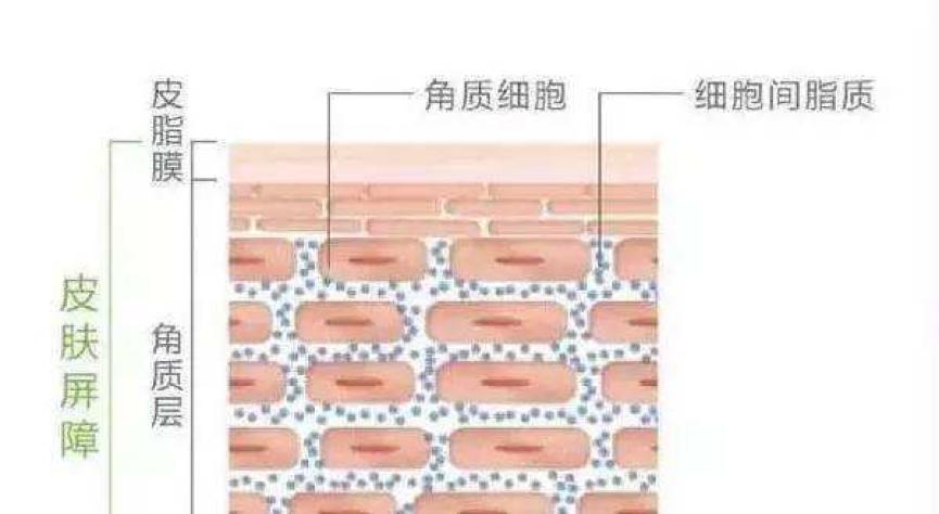 赢得无情岁月 丝铠丝素蛋白告诉你肌肤的秘密