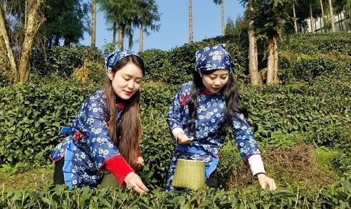 扬子江中水 蒙山顶上茶