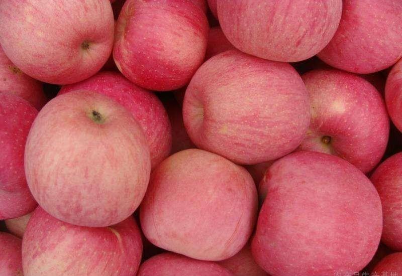 清明时节话行情——苹果市场动态评析