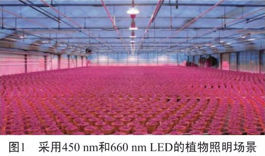干货!730nm远红光LED对植物生长的两大影响