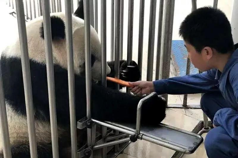 """""""探秘熊貓王國""""生態科考夏令營"""