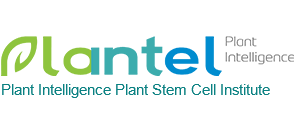 Shenzhen Plant Intelligence Plant Stem Cell Institute