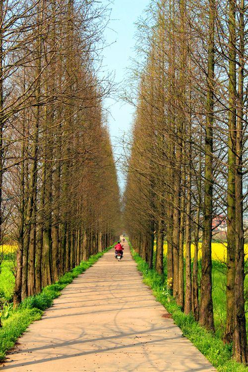 刘澎:论大众眼里的景观设计
