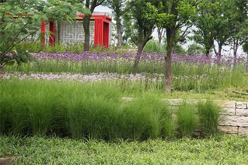 别墅庭院景观设计中植物造景,我们可以借鉴的公共区域的造景手法
