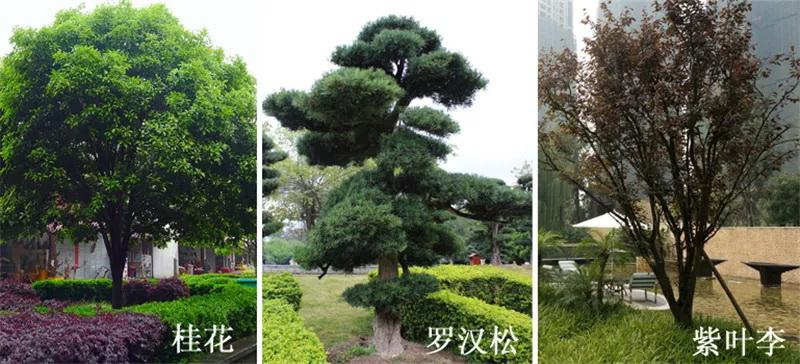 日常景观设计中用到的植物参考