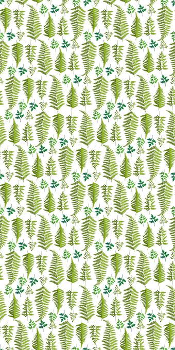 绿色植物发芽嫩叶