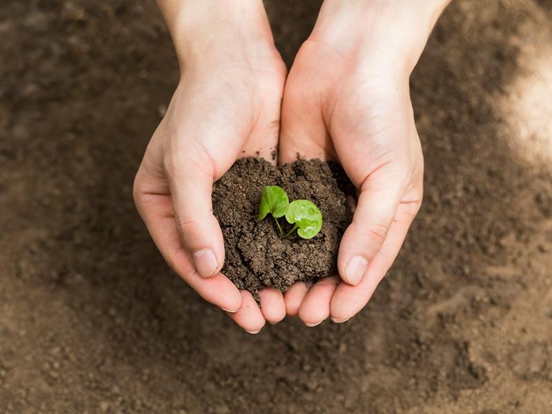 有机物污染土壤修复