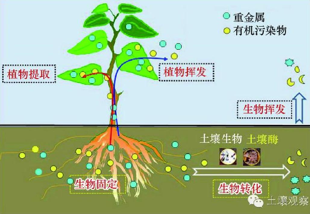 重金属土壤污染处理-生物修复