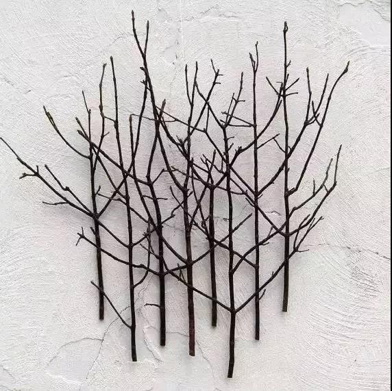美学 | 枯枝,随便插插就这么美