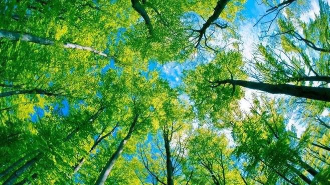 趣味活动项目:不倒森林