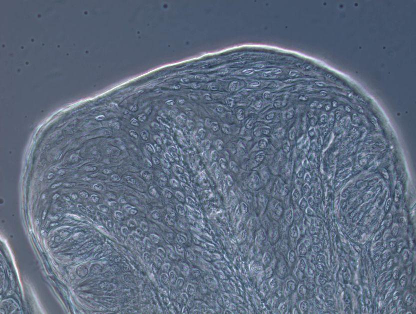 Primostar 3正置显微镜