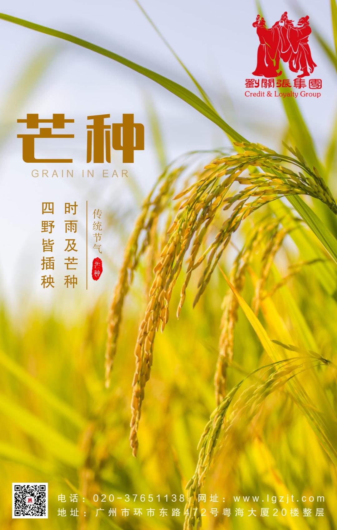 二十四節氣丨芒種:風吹麥浪,蟬鳴夏忙