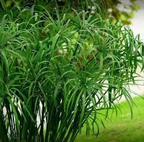 干货|详解人工湿地常见水生植物特性、功能及其分类!