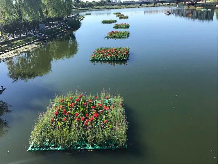 生态浮床技术及其对地表水体的原位修复综述(二)