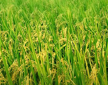 某农产品企业的绩效提升咨询项目