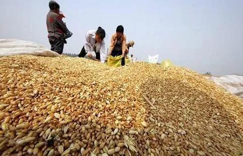 我国粮棉价格政策如何改革