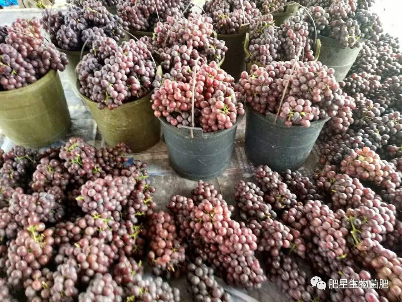 一斤葡萄价格差5元,同是一个园子的葡萄差别怎么这么大?
