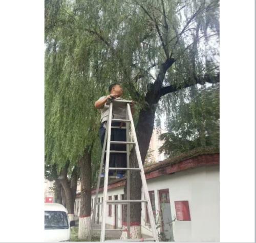 专业绿化队进行绿化修剪